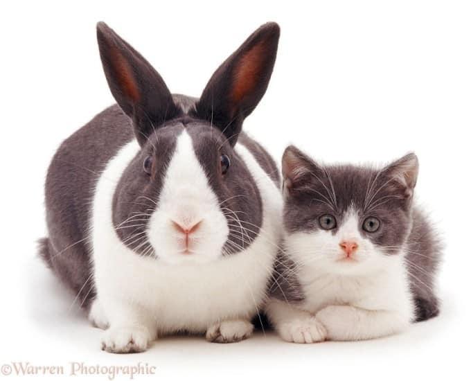 Big rabbit and cat