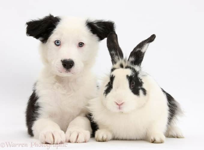 Cute dog and white rabbit