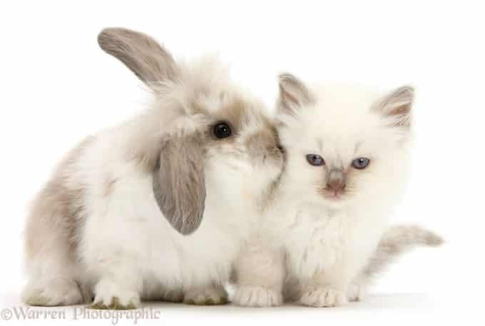 Cute kitty and white rabbit