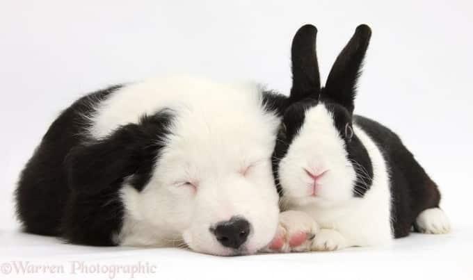 Dog & rabbit