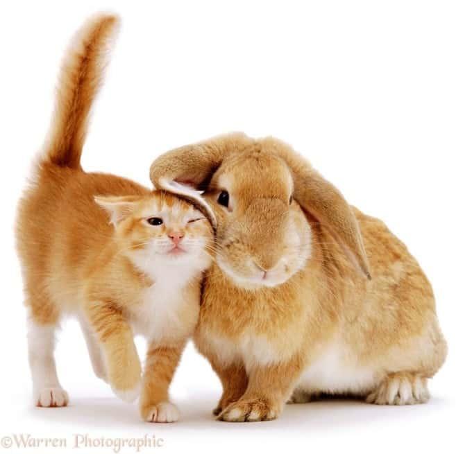 Orange Cat and Rabbit