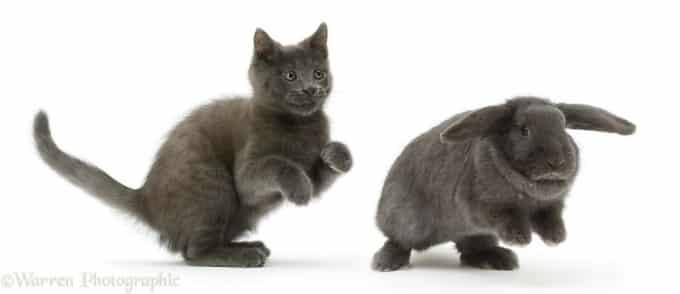 Black Cat and Rabbit