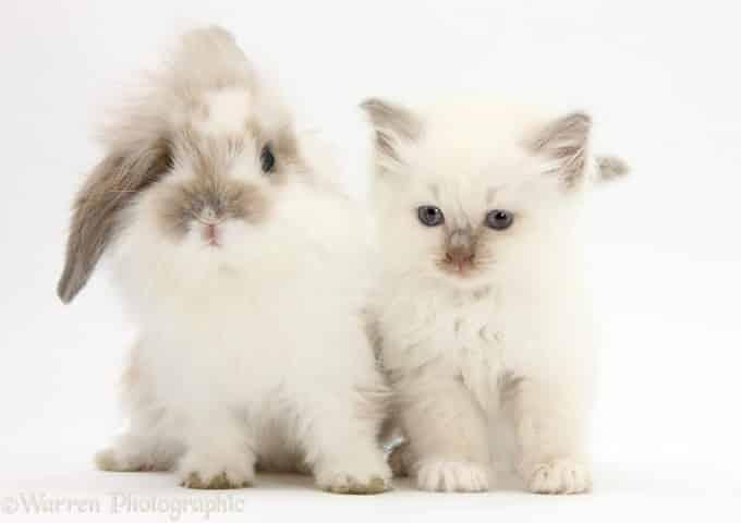 White cat and white rabbit