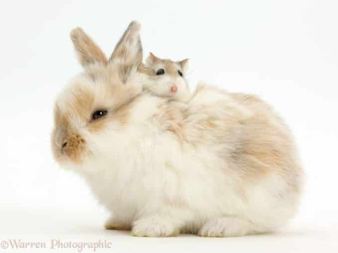 Mother rabbit and mouse