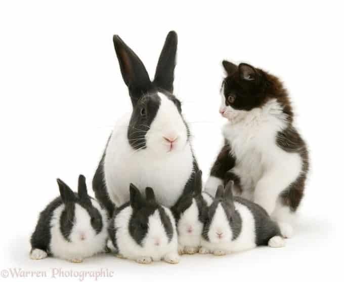 Family of Rabbits and Cats