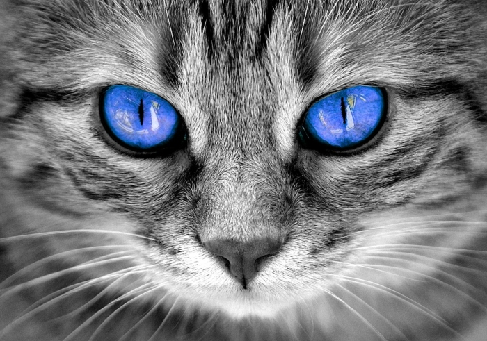 Cat Eyes Colors Information
