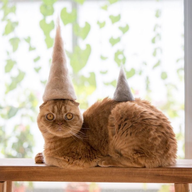 Cute Cats in Hats List