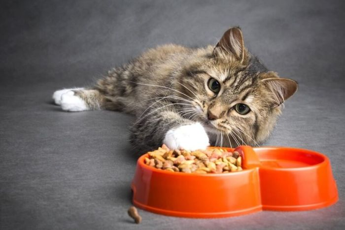 food for old cats with teeth problems