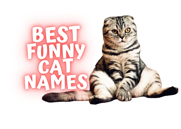 funny cat names list