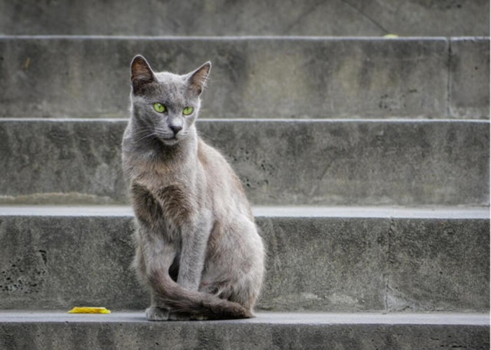 cute names for gray cats