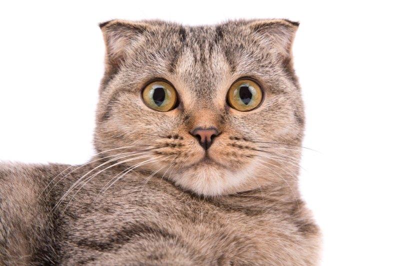 japanese cat names list
