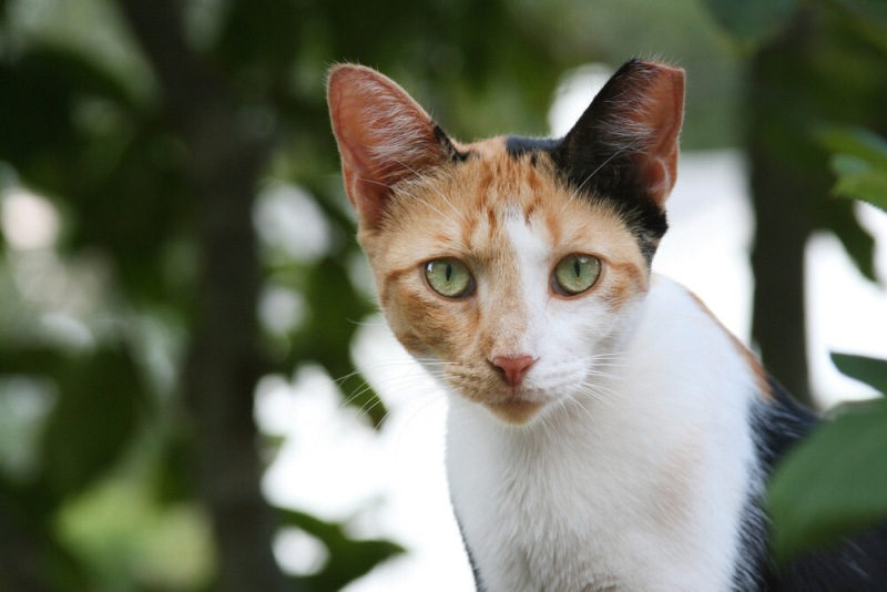 list of names for calico cat