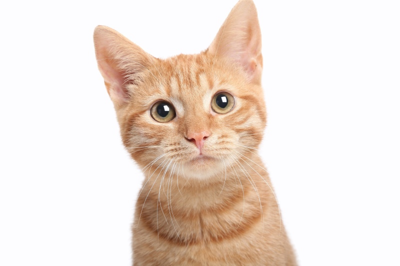 list of names for orange kitten