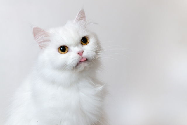 list of names for white cat