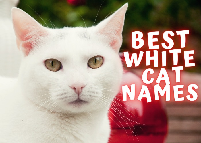 white cat names list