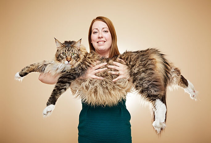 Barivel: the largest maine coon
